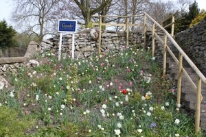 Tulips at cascades entrance
