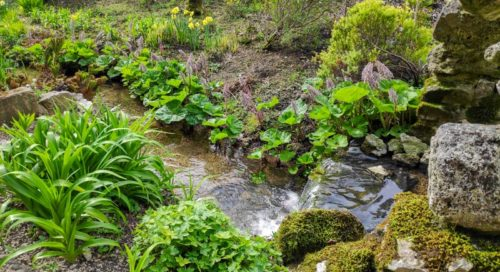 Garden for Wellbeing and Meditation at Cascades Garden - Spring 2020